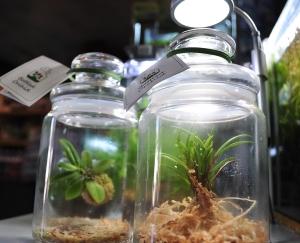 Bottledorchid