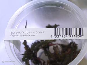Mizukusanomori02